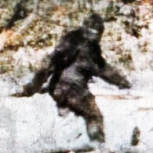 Patterson-Gimlin Bigfoot